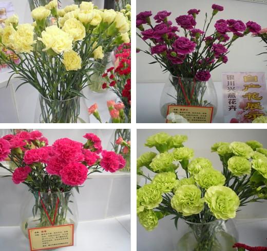 银川兴燕花卉 不一样的颜色 第五届中国 宁夏 园艺博览会 宁蒙陕甘信息